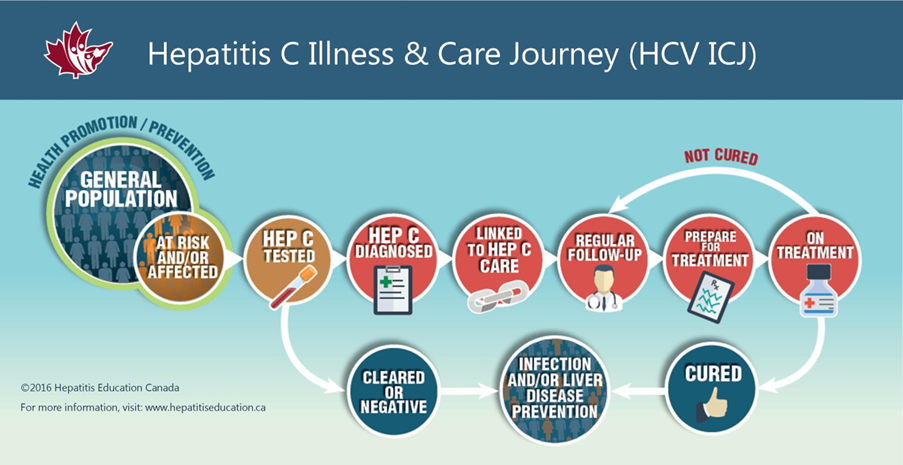Infographic showing the hepatitis C cascade of care in BC
